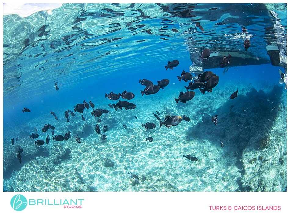 Under water life Turks and Caicos Islands