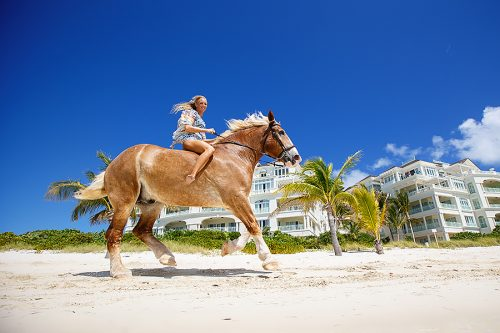 Provo Ponies, Turks and Caicos Vacation Photographers